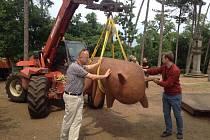 Festival Sculpture line v Praze: instalace sochy vyzývající k mazlení v zoologické zahradě.