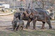 Návštěvníci mají nyní možnost vidět všechny slonice i slůňata pohromadě.