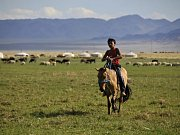 Transport koní Převalského z pražské zoo do Mongolska v rámci projektu Návrat divokých koní se podařilo zvládnout ze problémů. Klisny Barča, Jácint, Spange a Lotus vyběhly do aklimatizační ohrady rezervace Gobi B. po necelých 35 hodinách transportu.