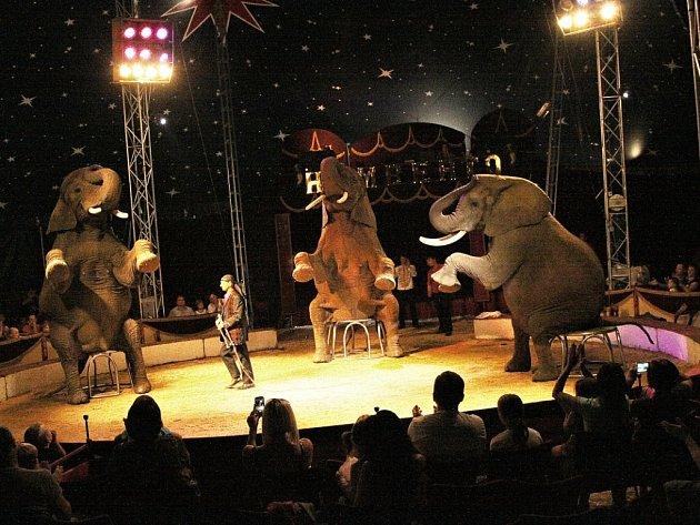 Drezura slonů v manéži Cirkusu Humberto.