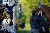 Na Císařském ostrově v Praze Troji začala 24. dubna 2009 výstava koní, která zde bude v následujících třech dnech probíhat.