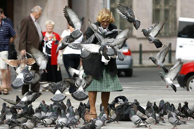 Volby narušil holub. Působil rozruch mezi voliči