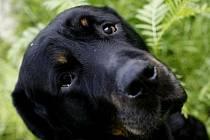 Podle předsedkyně klubu stafordshirských bulteriérů Ivy Zuranové se žádný pes nenarodí zlý a za jeho výchovu je odpovědný jeho majitel.