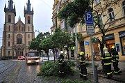 Spadlý strom na Strossmayerově náměstí.