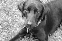 """pes Eduard """"Vestaj"""""""