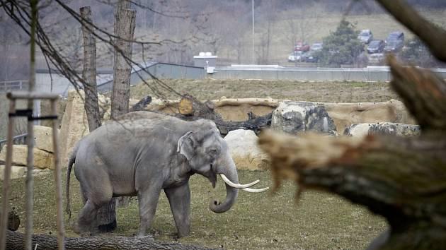 Sloni v přažské zoo dostali nový pavilon