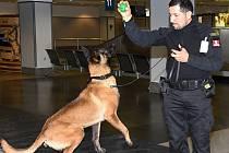 Výsledky práce při výcviku služebních psů určených pro Peru a Ruskou federaci představila ve čtvrtek na Letišti Václava Havla Praha Celní správa České republiky.