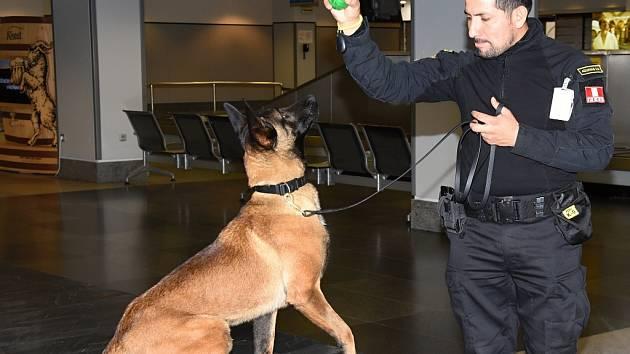 1380b4ab2a0 Výsledky práce při výcviku služebních psů určených pro Peru a Ruskou  federaci představila ve čtvrtek na ...