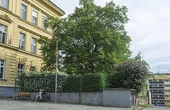 Stromy republiky - Vysočany. Lípa srdčitá, která se nachází před anglickým gymnáziem, byla zasazena žáky vysočanské školy za účasti představitelů vysočanské radnice. Stalo se tak 27. října 1928.
