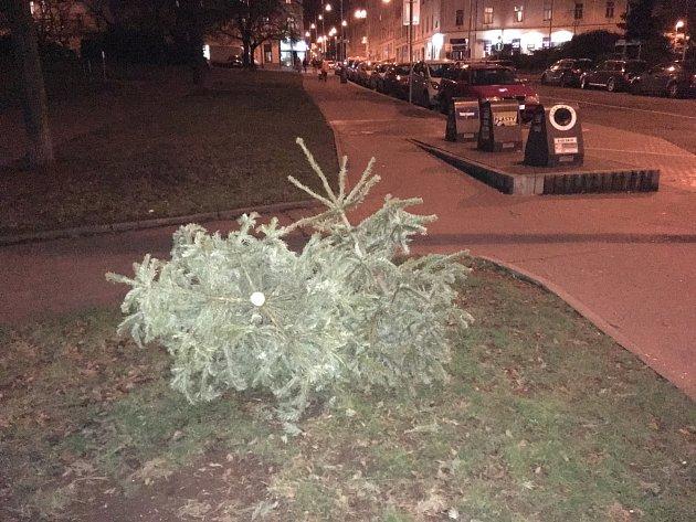 Vánoční stromečky do kontejnerů nepatří
