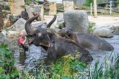 V sobotu se v pražské zoo slavil Mezinárodní den slonů.