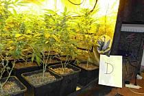 Operace s krycím názvem Carlo: celníci odhalili mezinárodně organizovanou skupinu obchodníků s marihuanou.