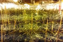 Celníci odhalili v rámci operace s krycím názvem Franc mezinárodně organizovanou skupinu obchodníků s drogami.