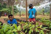 Olvie Missoula a Davilla Ntsemenke v Kabilonu ve školce se sazenicemi kokosu.