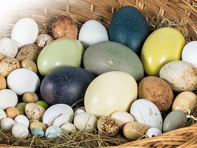 Ošatka ptačích vajec by mohla snadno konkurovat malovaným kraslicím.