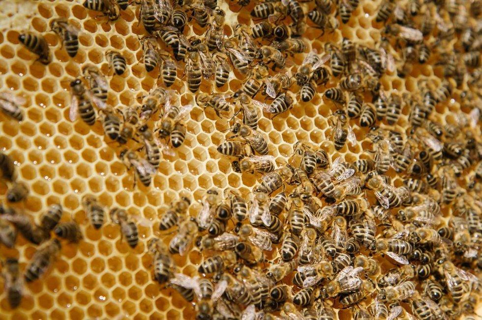 Kontrola včel.