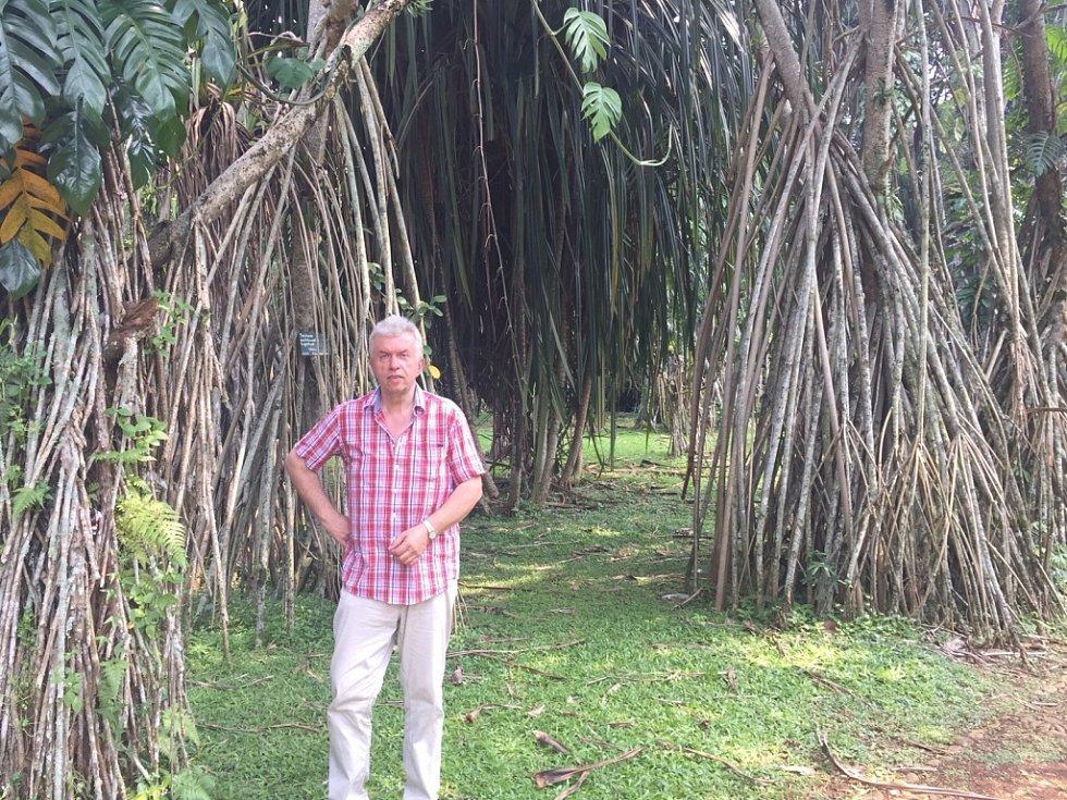 Houslista Jaroslav Svěcený v Indonésii: v slavné Botanic Garden Bogor.