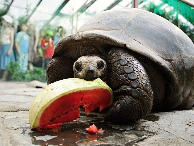 Obyvateli pavilonu velkých želv v pražské zoologické zahradě jsou želvy obrovské a sloní, dále pak varani a malé druhy želv.