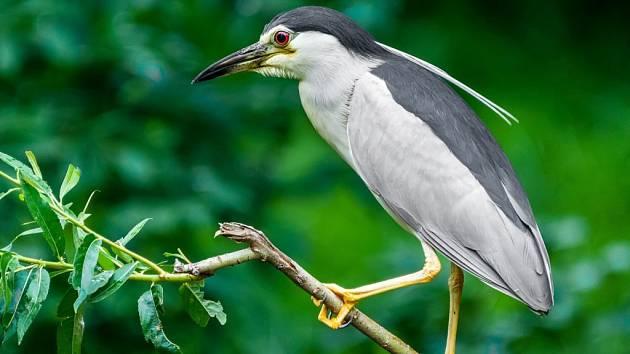 O dobrodružství kvakošů a dalších tažných ptáků se návštěvníci dozvědí v sobotu v Zoo Praha.