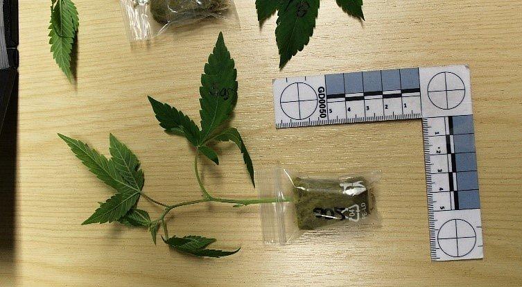 Trend pašování drog v zásilkách narůstá.
