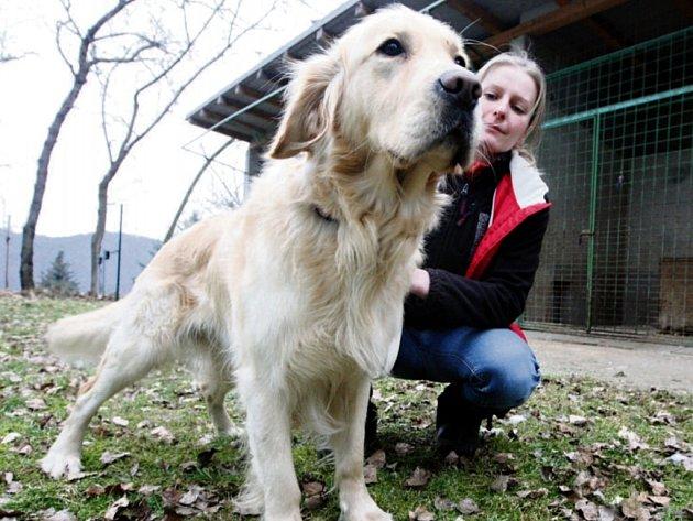 Městský útulek se ne vždy dokáže postarat o všechny psy, které se k nim dostanou. Umístění do lépe zařízených útulků stojí obce nemalé peníze.