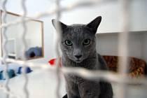 V kleci, ale spokojená. Poslední dobou se staly vedle psích, populární i kočičí hotely. Kočky zde čeká maximální péče.