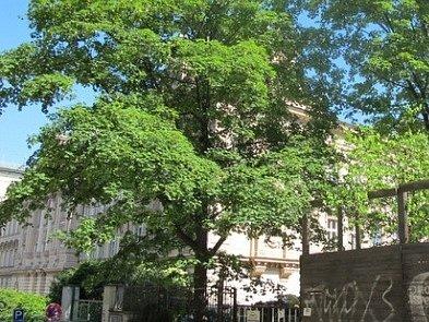 Občané Prahy 2 sepisují petici proti kácení stromů při stavbě sportoviště v areálu Na Smetance.