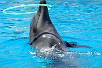Velká delfíní show a sedmiminutové plavání s těmito inteligentními mořskými savci. Na to se těšili lidé, kteří si zakoupili lístky za stovky korun. Po více než roce, kdy pořadatel odkládal představení, ale tisíce lidí nemají nic. Ani zážitky, ani peníze.