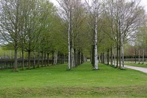 Zaměstnanci Lesů hl. m. Prahy se jeli inspirovat německými řekami a parky