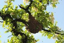 Pokud včely přímo neohrožují zdraví či život, volat hasiče je zbytečné