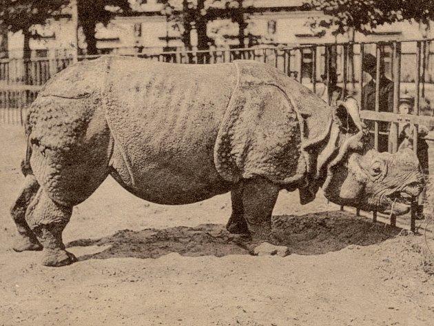 Historická pohlednice z berlínské zoo z roku 1903 (a téhož roku odeslaná).