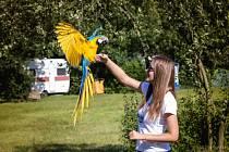 Máte rádi papoušky? Stavte se v neděli na setkání jejich přátel do Letňansko-Kbelského lesoparku.