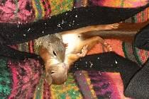 Syslí slečna Soňa s kamarádkou veverkou.
