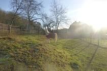 Nalezený kůň v útulku pro opuštěná zvířata v Troji.