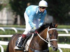 Petr Foret na koni Lindy Alleged (stáj Arte-Šatra) na dostizích ve Velké Chuchli.