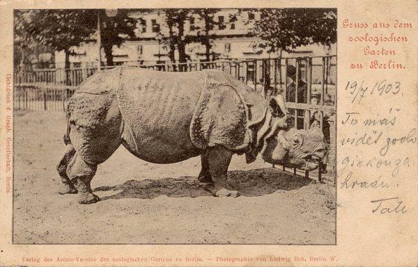 Historická pohlednice zberlínské zoo zroku 1903 (a téhož roku odeslaná).