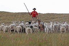 Bača Jiří Santner při řízené pastvě ovcí a koz v Divoké Šárce, která probíhá ve spolupráci s odborem ochrany prostředí Magistrátu hl. m. Prahy.