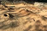 V zoologické zahradě v Praze můžete vidět i mládě psounů