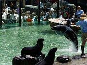 V pražské zoologické zahradě byl 23. května 2009 slavnostně otevřen nový pavilon lachtanů.