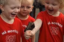 Zahájení výstavy Motýli za účasti dětí z Mateřské školy Motýlek z Prahy 6 ve skleníku Fata Morgana. Už pošestnácté je možné ve skleníku Fata Morgana obdivovat živé pestrobarevné exotické motýly volně poletující mezi návštěvníky.