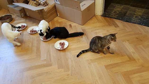 Kočičí rodinka ze zahrádkářské kolonie. Foto: Hana Janišová