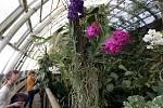 Výstava orchidejí v botanické zahradě Troja.