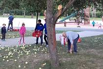 Sběr jablek v parku Kamýk v Praze 4.