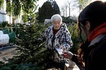 LETOS ZASE DRÁŽ. Vánoční stromky podražily až o deset procent.