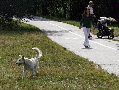 """Jako místem možného """"Hydeparku"""" se uvažuje o Parukářce na pražském Žižkově."""
