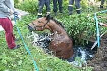 V obci Radlík, nedaleko Jílového u Prahy svedl díky hasičům vítězný boj o život kůň, který se propadl jímky plné vody.