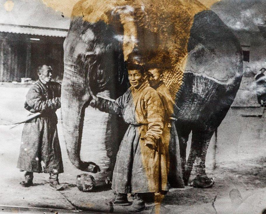 Bogd-chánův slon se třemi lámy, kteří se o něj starali