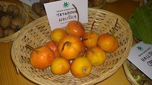 Tatarova hruška – tato unikátní odrůda vznikla v Praze křížením hrušně a jeřábu