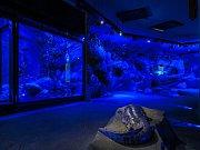 Velemlokárium s velemloky čínskými v pražské zoologické zahradě - noční režim.