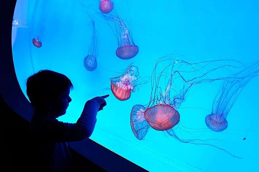 Svět medúz na Pankráci přichystalo pro návštěvníky spoustu novinek. Otevřeno je denně.